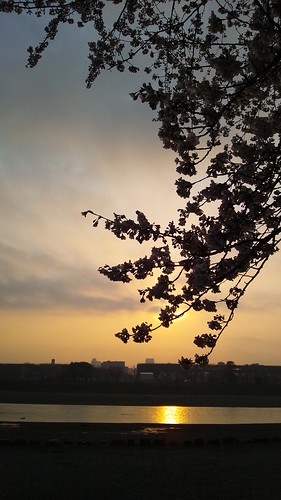 2012年 春 桜 相模川