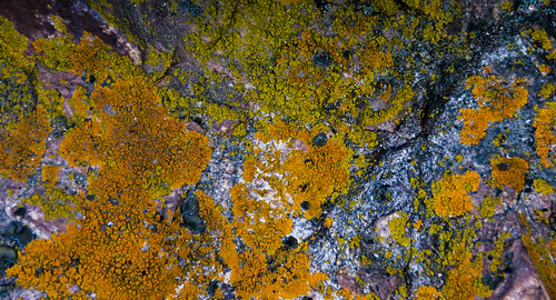 california orange plant black color texture nature yellow rock stone gold nikon purple granite lichen rough warmcolors d7000
