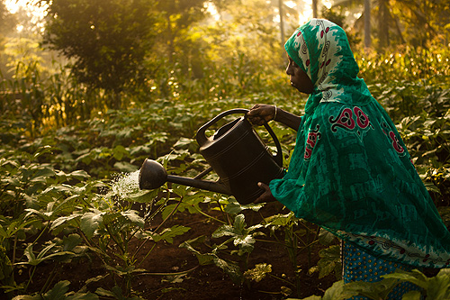 Female farmers in the Uwamwima Growers Association in Zanzibar,