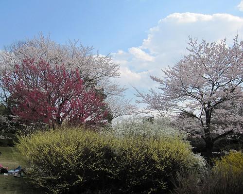 昭和記念公園 by Poran111