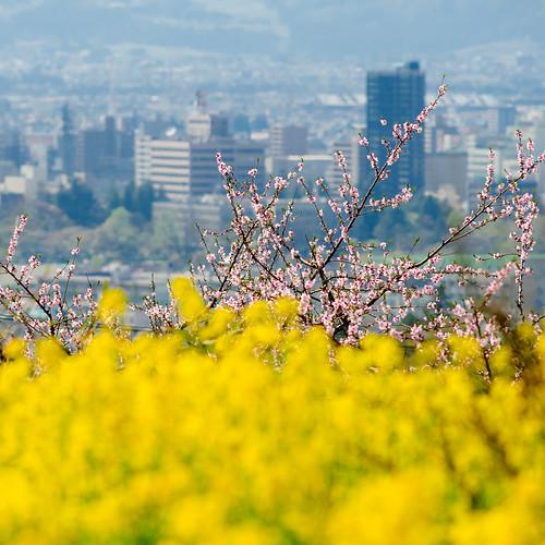 japan fukushima 2012 福島 d700 afnikkor300mmf4ed
