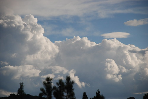 blue trees sky cloud tree clouds