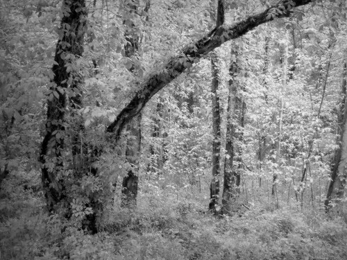 trees bw green nature wet rain rural creek forest landscape virginia perception woods scenery country dream may fantasy unreal charlottecounty platinumheartaward