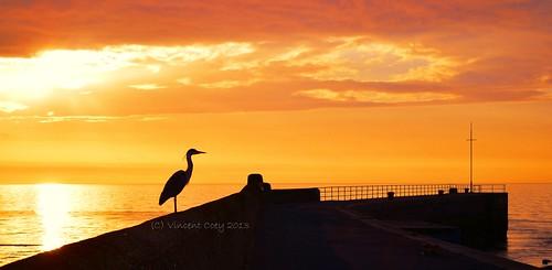 county ireland sea sky irish sun heron sunrise pier nikon harbour tide low silhouettes wicklow bray d5100 mygearandme mygearandmepremium mygearandmebronze mygearandmesilver