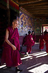 temple, tradition, religion, photograph, monk,