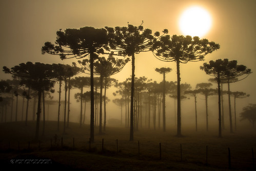 Nascer do Sol na Serra by Evandro Badin