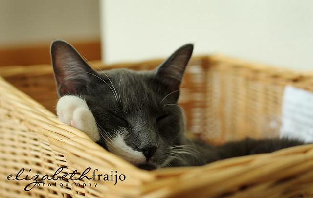 Kitty01W