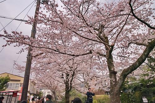 【写真】2013 桜 : 哲学の道/2018-12-24/IMGP9223