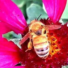 Go bee!