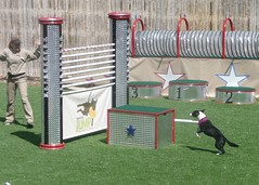 play(0.0), dog sports(1.0), animal sports(1.0), pet(1.0), dog agility(1.0),