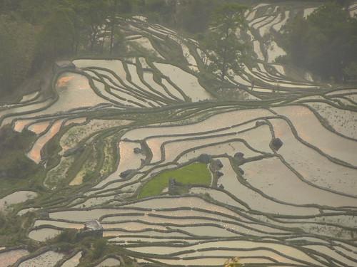 Yunnan13-Yuanyang 24-Bada (57)