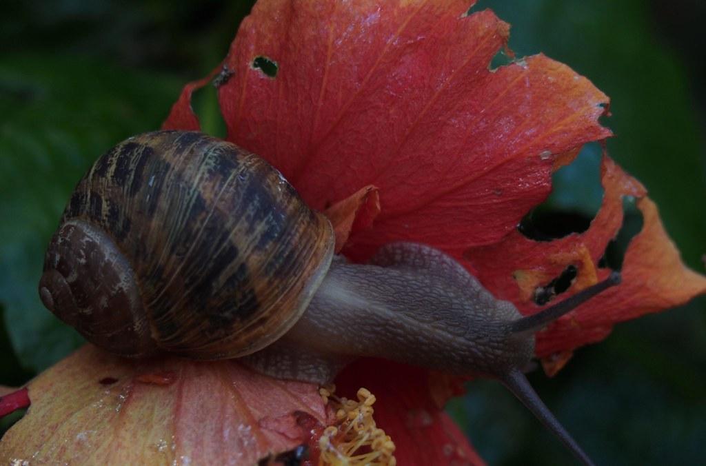 A feast for a snail