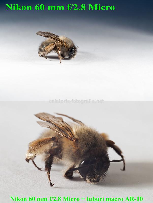 Primăvară, albinuțe și... tuburi macro 14076556431_18544d74dd_c