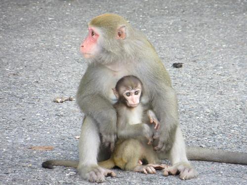 守護台灣獼猴:不餵食、不接觸、不帶寵物入園。(圖片來源:壽山國家自然公園籌備處)