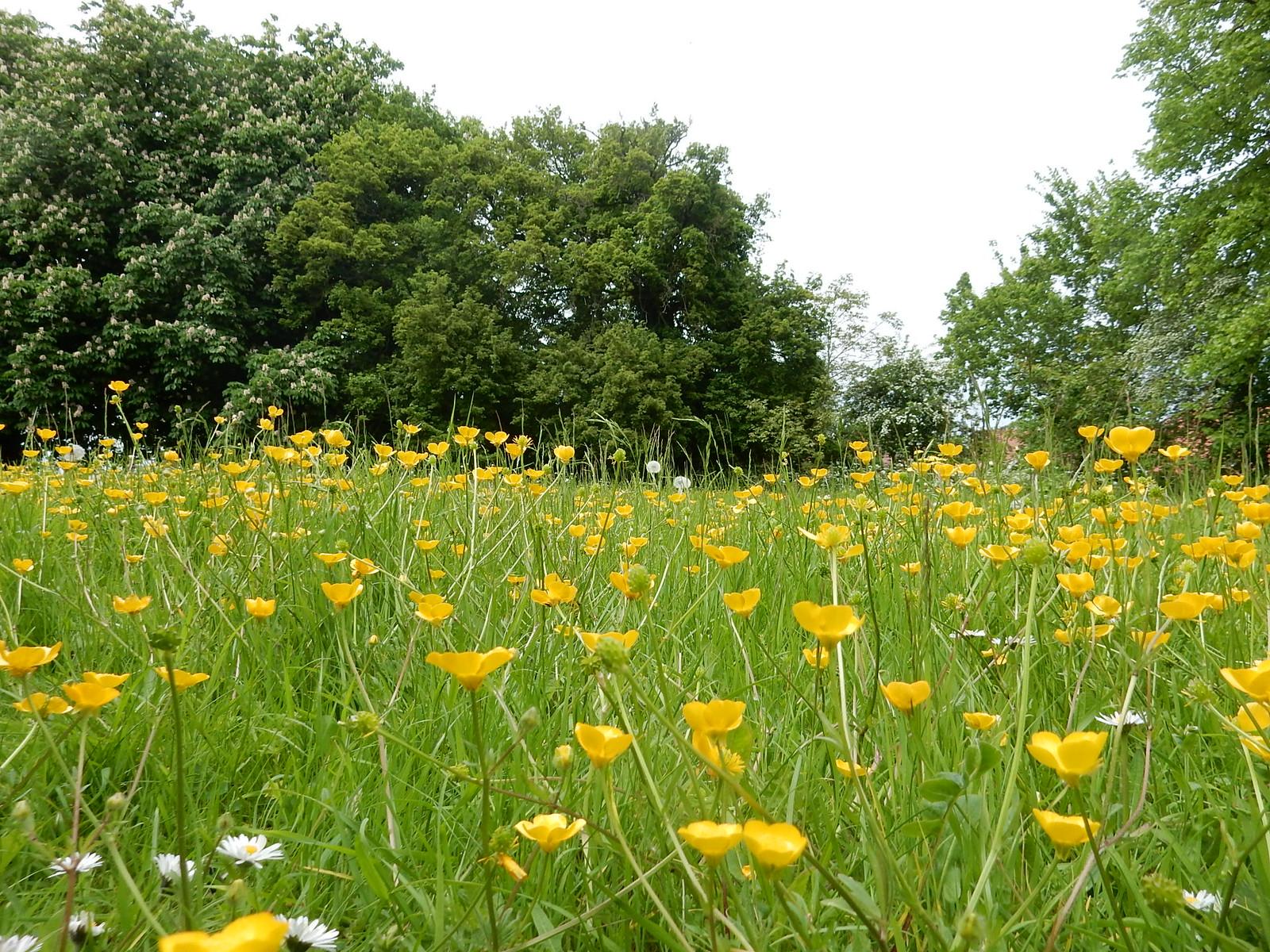 Great Henny churchyard Bures to Sudbury