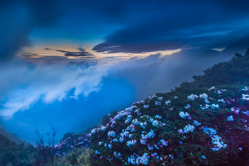 sunset color misty night canon nationalpark spring cloudy taiwan 南投 夕陽 bluehour 風景 cpl afterglow 春天 nantou 太魯閣國家公園 1635mm 雲霧 mainpeak explored 玉山杜鵑 合歡山主峰 霞光 mthehuan rhododendronpseudochrysanthumhayata 5dmarkiii taiwanalpinerhododendron