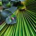 Lines of Green. by Omygodtom