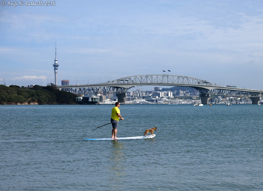 Sofitel Auckland Viaduct Habour - Luxury Waterfront Hotel
