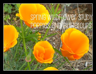 Spring Wildflower Study Button
