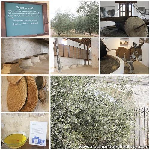 #Bloguerosenjaen. Museo del Olivo