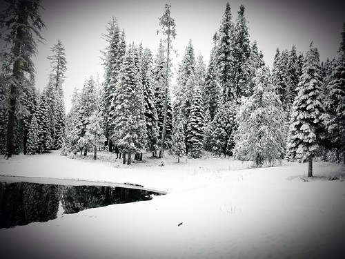park white snow nationalpark national yosemite