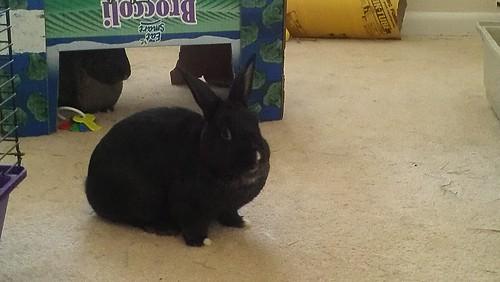 Bashful Bunny <3
