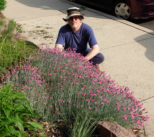 Hanging with the Dianthus that is taking on the sidewalk