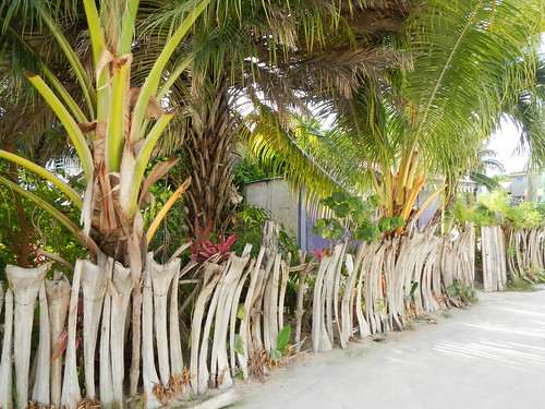 Traditional palm fencing