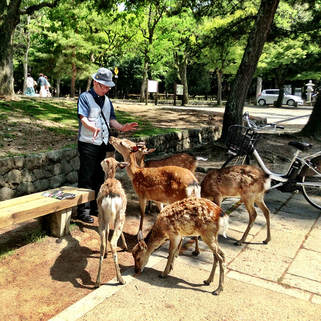 the deer whisperer.