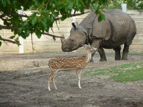 Wildlife at Buffalo Zoo