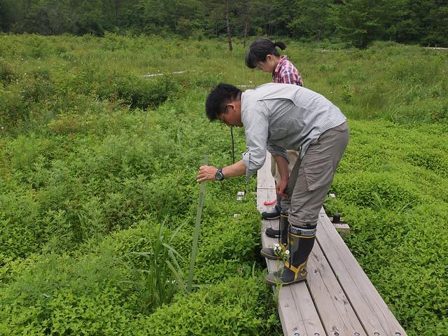 調査区内の全ての種を記し,高さを測る.