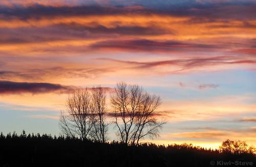 sunset newzealand tree nikon nz waikato northisland bestcapturesaoi mygearandme blinkagain