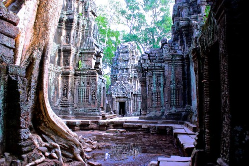 reflections at Ta Prohm