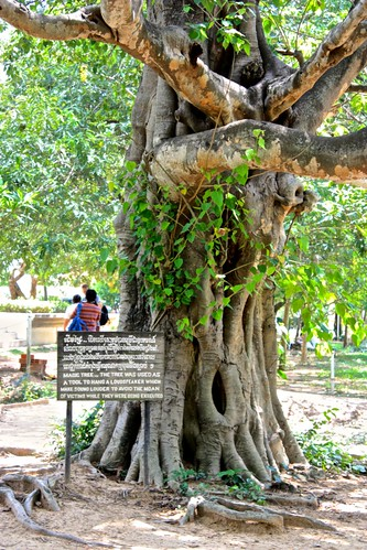 the tree had a loudspeaker that blasted Cambodian folk music to muffle the moans of victims being executed