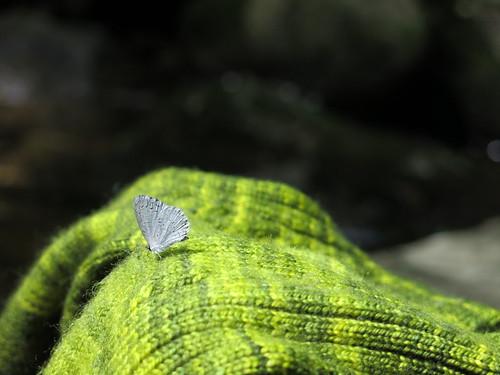 Sock Butterfly