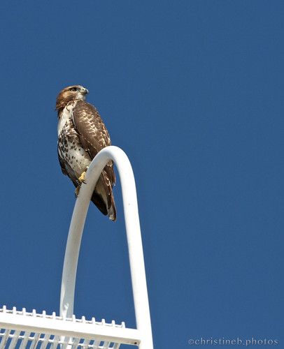 Dfemale atop Bartels Hall3 by ccb5 19 July 2013