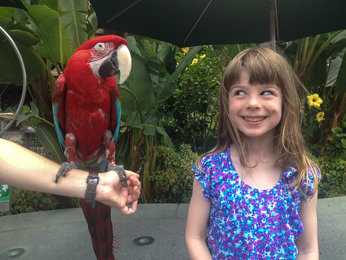 Ellie and a Parrot