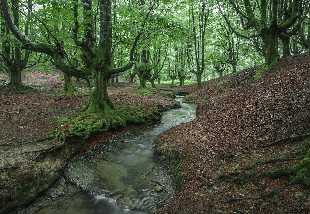 Bosque de Otzarreta-Bizkaia