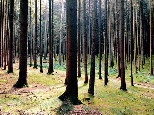 originalfilter vscocam uploaded:by=flickrmobile flickriosapp:filter=original