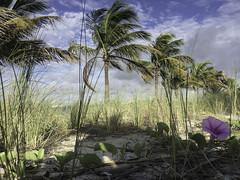 Key Biscayne Beach - Taking iPhone 5S Camera to its limits   130924-0135-jikatu