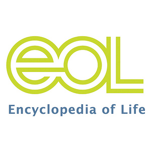 Encyclopedia of Life Images