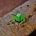 D Green Spider by his restless eyes