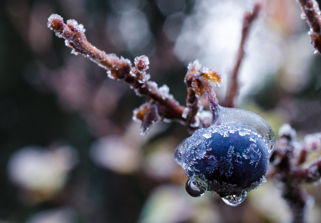 The first frost - winter is around the corner