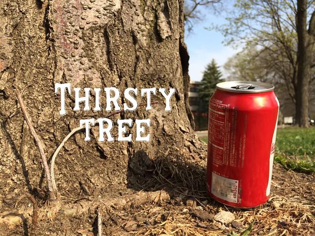 Thirsty tree