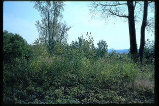 96j013: Looking SSE from across from Goose Island dike (near foot of Stansifer Ave.)