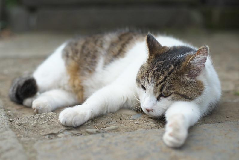 東京路地裏散歩 谷中のネコ 2015年5月24日