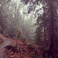Hiking in the mist and drizzle