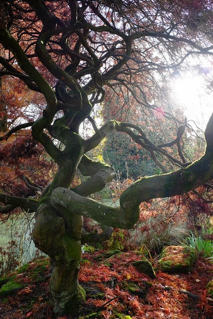 Twisty Tree....
