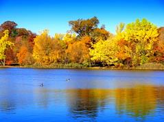 Marvelous Autumn