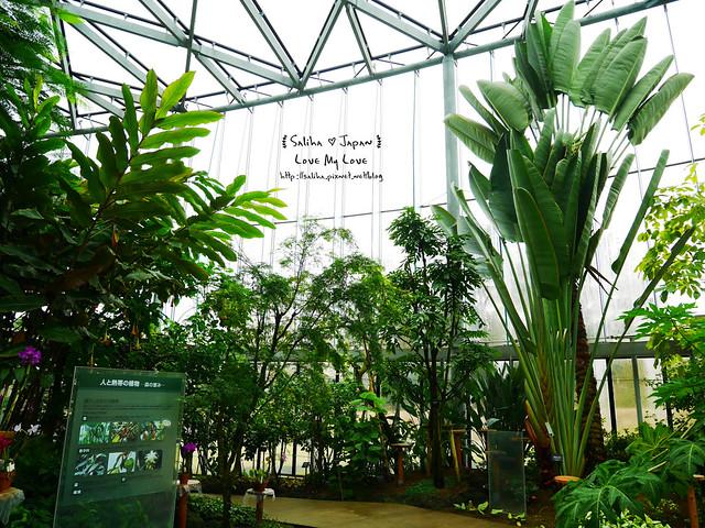日本東京景點新宿御苑溫室植物 (29)